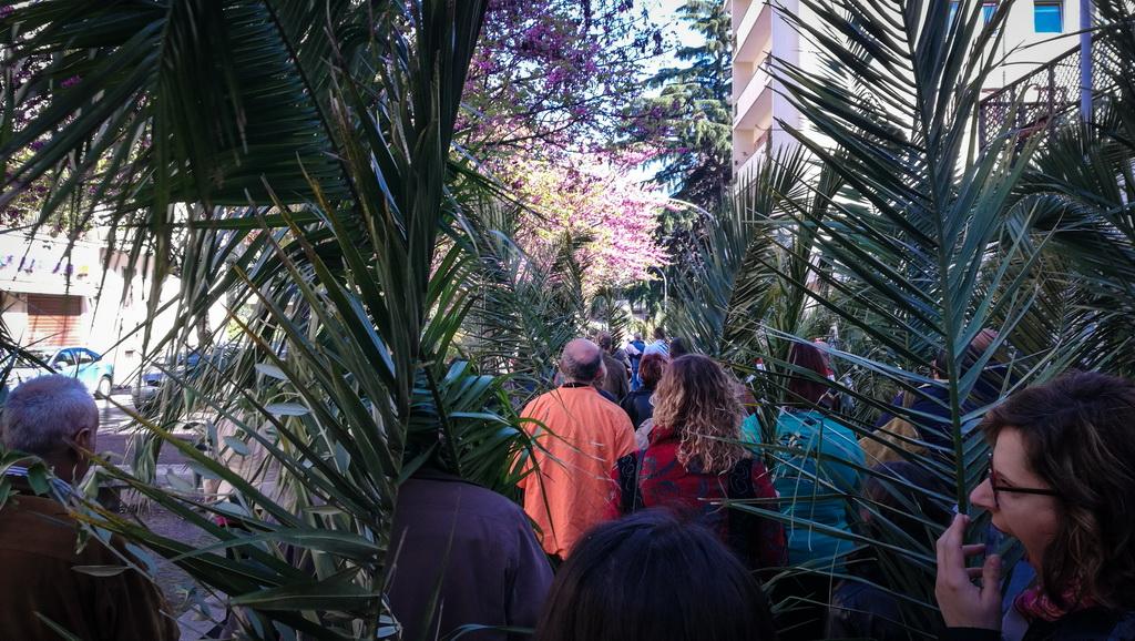 Domenica delle Palme 2017